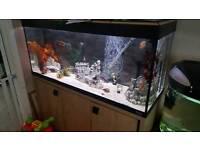 Fluval aquarium 4ft