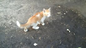 Nice kitten for good home