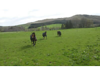 Year round grazing / stabling / Full or Assisted Livery - Straiton, South Ayrshire