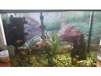 Fish tank 64litres with everything