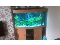 curved glass fish tank with internal filter (collection only)
