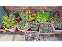 HUGE Job Lot outdoor Pots/Planters Full Of Garden Plants/Foliage - Nice! Fill a small garden!! L@@K!