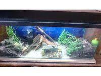 3ft aquarium....full set up
