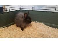 Fluffy baby rabbit