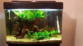 Interpet fishpod 64litre & stand