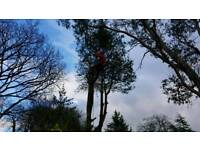 A Cut Above the Rest Tree Services for all tree work, garden & property maintenance