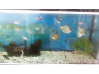 Variety of tropical fish