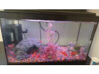 Fresh water fish and full setup