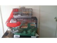 2 gerbils with cage, food and bedding