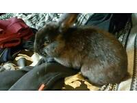 Loop rabbit