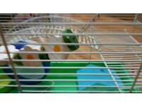 Large hamster cage with full set