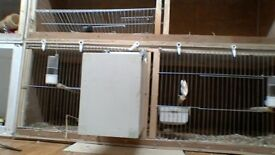 Breeding cages for sale