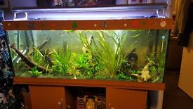 5ft complete fish tank and fish external filter