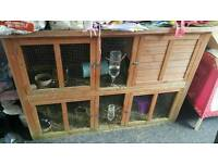 4 guinea pigs with double hutch food and accessories