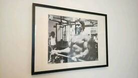 Large Arnie Pumping Iron Print in Quality Frame