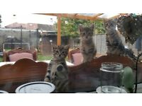 4 cute kittens are looking for a new home