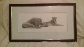 Savannah Lion & Lioness Picture