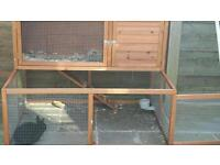 Netherland dwarf rabbits x 2 with hutch with built in run.