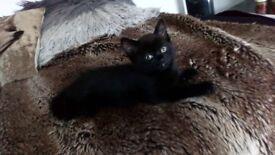 Devil kittens for sale=)