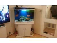 Fish tank+fish