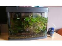 40 litres planted tank, fish and accessories