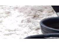 Mens Shoes size 7 black