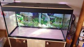 Fluval Roma 200L (full setup fish tank)