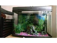 64 litre fish tank with fish
