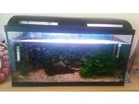 100litre fish tank with fish and accessories £90