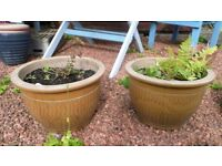 2 GOLDEN OCHRE GARDEN POTS - USED BUT IN GOOD CONDITION
