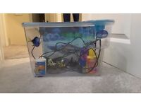 Finding nemo fish tank