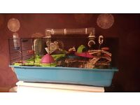 Hamster and everything you need for sale!
