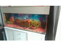 Full tropical fish tank set up