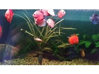 Wildheart aquatics fresh water,pond fish & koi