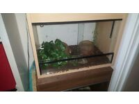 Corn snake and set up free to a good home