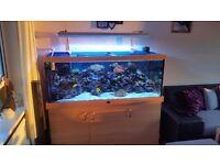 600l marine fish tank