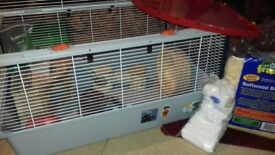 Large hamster cage + all accessories