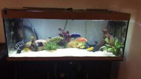 5ft tank with all accessories filters etc