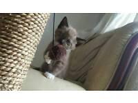 Such a cute kitten for sale