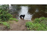 Micaela's 24/7 Petcare - Dog Walking, Pet Sitting, Boarding, Horse care