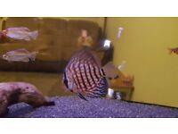 Beautiful fish and tank