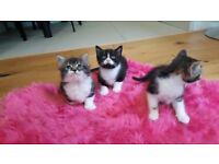 Lovley kittens looking for new home