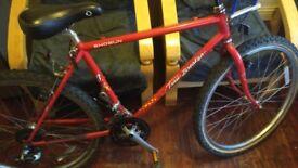 Shogun Trailblazer adults mountain bike