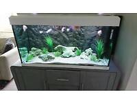 Fish and 200lt tank