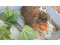 Young 1yo Female Rabbit