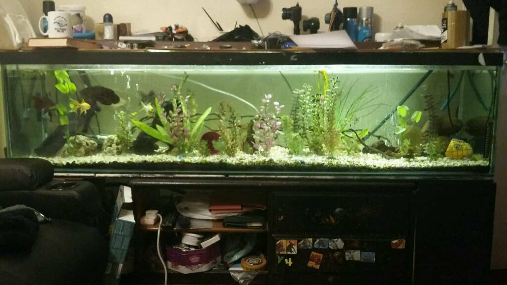 6ft fish tankin Plymouth, DevonGumtree - Hi there here we have a 6x2x18inc fish tank and everything that come with it external filter internal filters heater big air pump ready to go and all fish thats in there moving house forces sale as to big for house where Im going 70 ono cheers