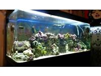 600ltr fish tank and cabinet