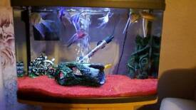 60L fish tank with stand and fishes
