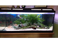 Full Tropical Fish tank set up with fish