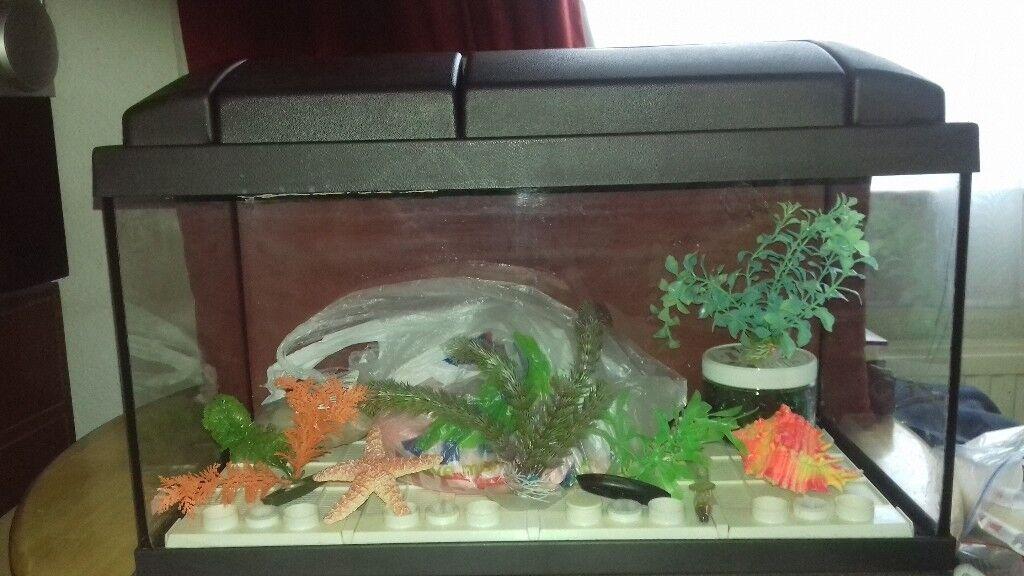 Fish tank ....with orange gravel....plastic weeds....orange shell ...green glass pebbles.